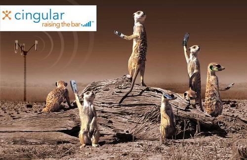Meerkats to the rescue!