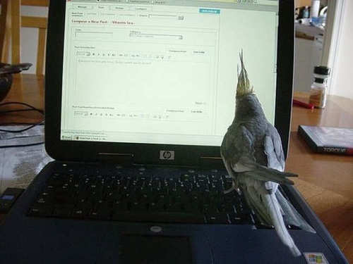 Giving new meaning to hunt-and-peck typing!