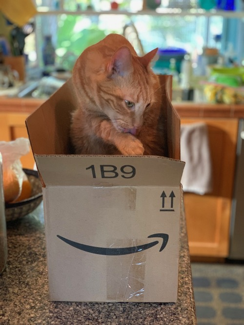 Amazon is cleaning up in the cloud, much as the author's cat cleans itself in this Amazon box.