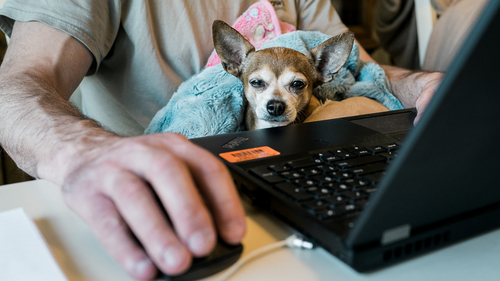 Pandemic dogs: Coronavirus has helped Microsoft's cloud businesses to surge, as the world continues to work from home. (Source:  Allie on Unsplash)