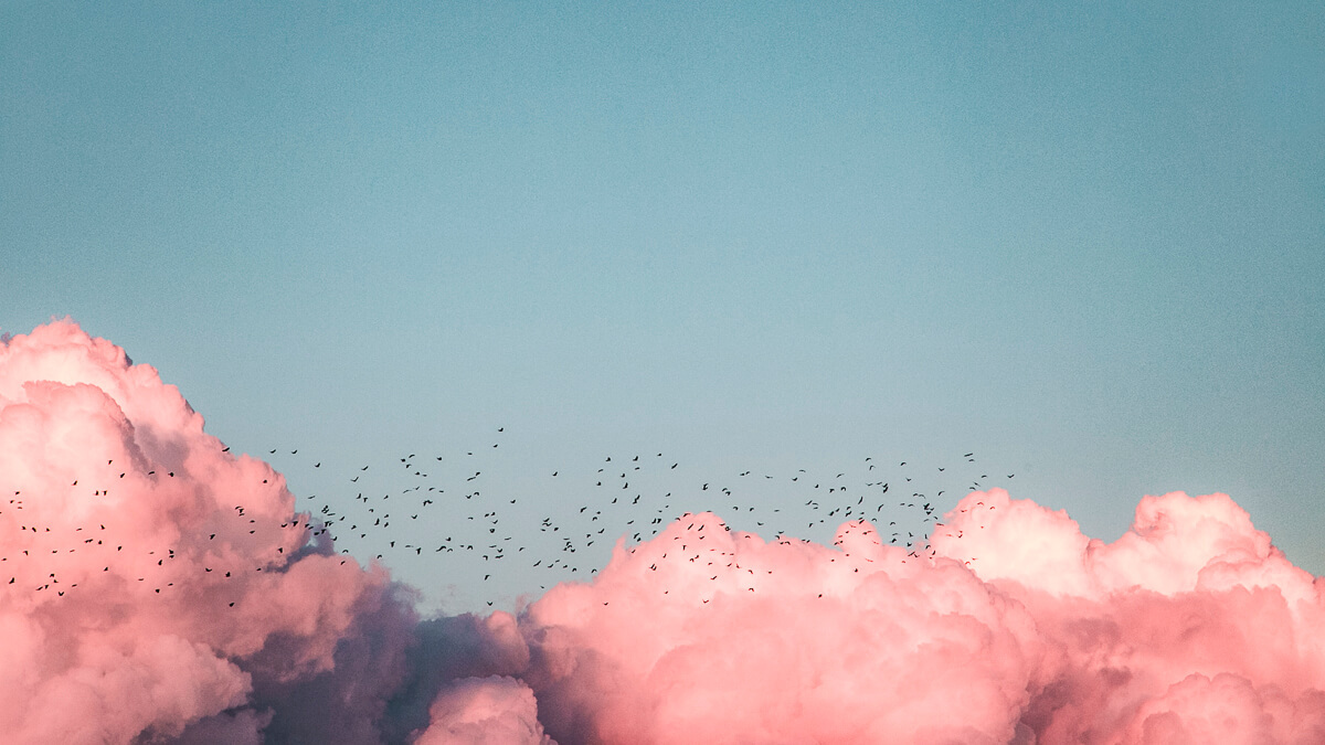 Birds of a feather: The coronavirus pandemic has seen cloud collaboration and video calling tools soar.  (Source: Kenrick Mills on Unsplash)