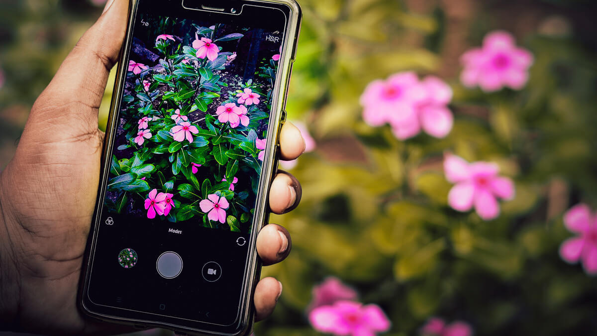 Fresh blooms: India's operators had called for more spectrum to help them bring down the cost of network rollout.  (Source: Unsplash)
