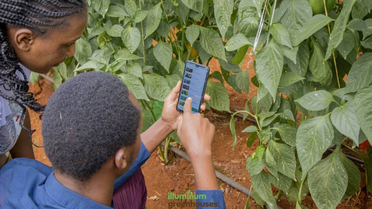 Smartphones are making IoT solutions more accessible to farmers.  (Source: supplied)