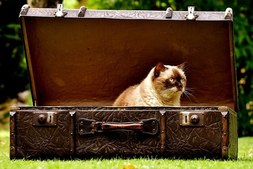 Unnecessary photo of a cat in a suitcase. Thanks, Max Pixel!