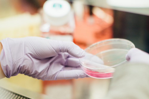 Biomedical research is advancing quickly due to AI being able to automate many parts of the drug discovery process. (Image: Drew Hays, Unsplash)