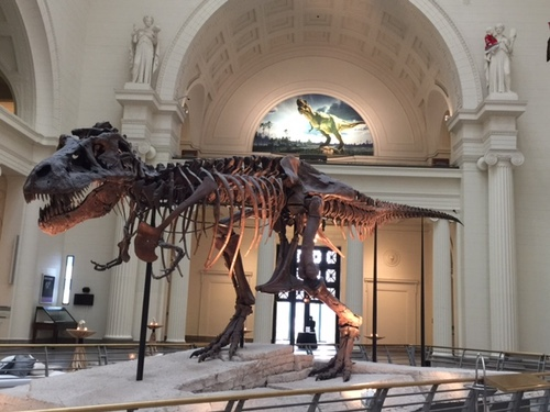 One of the most popular sights at the famous Chicago Field Museum is the fossil known as 'Sue,' the largest, best-preserved and most complete Tyrannosaurus rex ever found. Sue measures 42 feet long from snout to tail and 13 feet tall at the hip. Sue's original skull, which weighs 600 pounds, is on exhibition on the Museum's balcony, under the mural seen above her. Sue was the guest of honor at BTE's Leading Lights Awards dinner on Monday night.