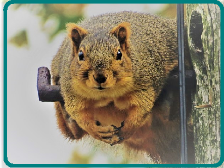 Tough to imagine cable is the culprit for this squirrel's pleasantly plump physique.  (Source: Steve Baker/ Flickr) - (CC BY-ND 2.0)  